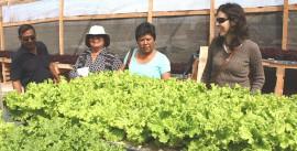 Cultivos hidropónicos 3 (1)