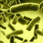 bacteriaultra2