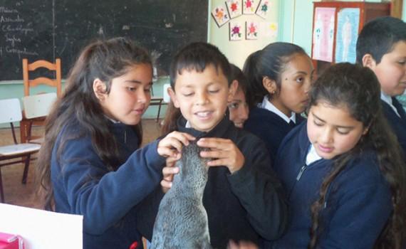Premian a museo escolar de biodiversidad marina apoyado por la UCN