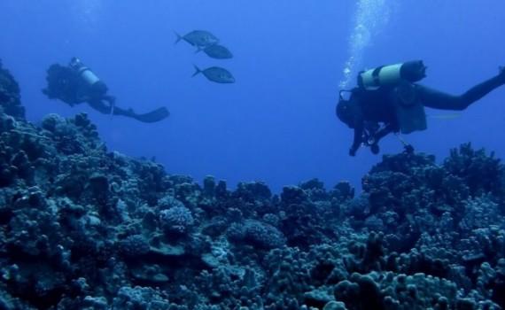 Generarán plan de administración de Parque Marino Nazca-Desventuradas y evaluarán el estado de pesquerías de Isla de Pascua