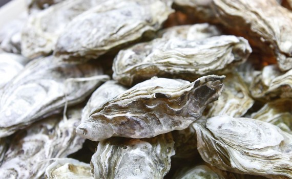UCN desarrolla taller intersectorial sobre cultivo de ostra japonesa para pescadores artesanales de la región de Coquimbo