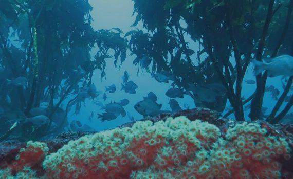 Ocean Eyes: Los buzos son los ojos del mar de Chile.
