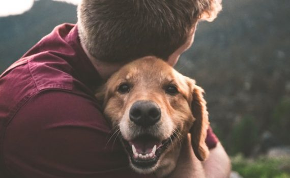 ¿Qué hacer con su mascota en caso de divorcio?