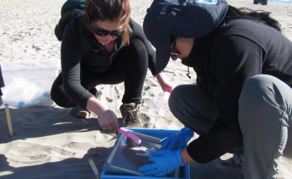 Chilenos capacitarán en investigación sobre desechos plásticos marinos a profesores en Costa Rica y Ecuador