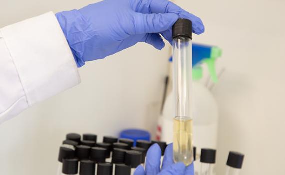 Destacan resultados del Laboratorio de Servicios Analíticos de la UCN en rondas de evaluación anual
