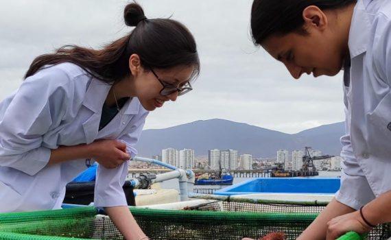 En Chile la participación de las mujeres en investigación científica es sólo de un 33%